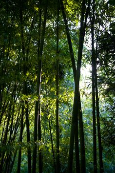 The Bamboozle, Trebah Garden, Cornwall Falmouth, Cornwall, Planting, Acre, Britain, Breathe, United Kingdom, Amanda, Landscapes