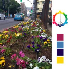 Colores Complementarios Mutuos