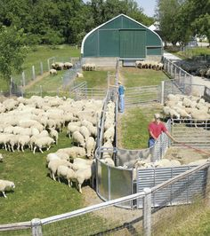 Something like this up by the Sheep barn for ease of herd maintenance.