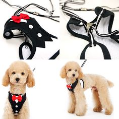 EasyGO Bowtie Dog Harness | Dogo Pet Fashions at PupRwear