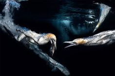 The Stunning Images From an Underwater Photography Competition