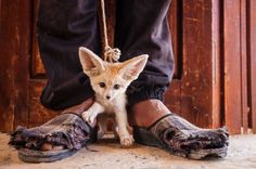 Fennec Fox by Italy's Bruno D'Amicis via cbc.ca: A Tunisian teen is shown offering to sell a fennec fox pup is the winner of the 'world in our hands' category. Catching or killing wild fennec foxes is illegal in Tunisia but is widespread... #Photography #Wildlife #Wildlife_Photographer_of_the_Year #ROM