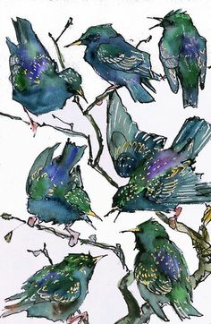 starlings by chris furse