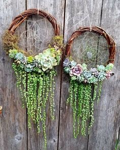 Beautiful idea.Living succulent dream catchers #succulent #dreamcatcher #greendreams