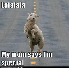 llama meme mom says im special - Google Search