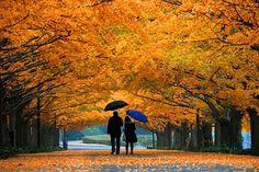 A beleza das cores do outono.