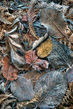 ~~Frosted Leaves by Andrew Davoll~~
