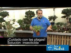 Huerto urbano: Cómo cultivar fresas silvestres en casa - YouTube