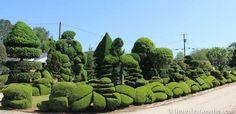 Pearl Fryar's Topiary Garden, Bishopville, South Carolina