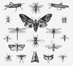INSECTS FREE VINTAGE VECTOR PRINTABLE   http://www.freevintagevectors.com/2015/07/insects.html