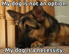 Wicked Training Your German Shepherd Dog Ideas. Mind Blowing Training Your German Shepherd Dog Ideas. I Love Dogs, Puppy Love, Cute Dogs, Animals And Pets, Cute Animals, Pet Sitter, Motivacional Quotes, German Shepherd Puppies, German Shepherds