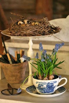 bulbs in a cup.. love it..but really love the nest on the cake platter