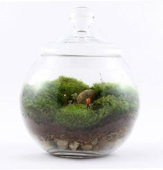 How to grow moss for a terrarium. A fun moss terrarium by Uncommon Goods Mini Terrarium, Miniature Terrarium, Twig Terrariums, How To Make Terrariums, Succulent Terrarium, Terrarium Kits, Water Terrarium, Potted Succulents, Terrarium Wedding