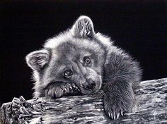 "Judy White's awesome scratchboard of my photo ""Rainy Day Grizzly Cub"". Judy White's awesome scratchboard of my photo ""Rainy Day. Animal Sketches, Animal Drawings, Art Drawings, Kratz Kunst, Black Paper Drawing, Bear Paintings, Scratchboard Art, Bear Drawing, Bear Tattoos"