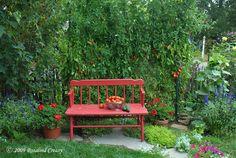 паста-помидоры-на-красном стенде