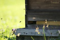 Bienenstock - Bee hive Pure nature... Bee, Pure Products, Nature, Beehive, Bees, The Great Outdoors, Mother Nature, Scenery, Natural