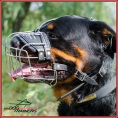 Buy this metal wire basket Rottweiler muzzle to walk your Canine safely in public places! Also great for socializing and obedience training. Rottweiler Dog Breed, Dog Muzzle, Dog Collars & Leashes, Cane Corso, Wire Baskets, Collar And Leash, Dog Pictures, Dog Breeds, Your Pet