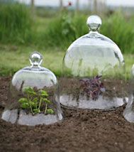 glass garden cloche - Google Search
