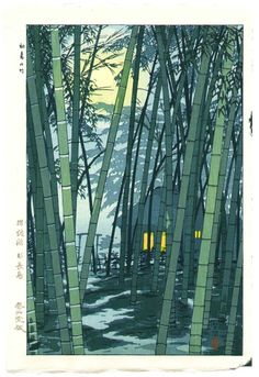 walk in a bamboo forest