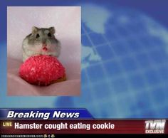 OMG OMG OMG IT'S AN OUTRAGE!!!! THE HAMSTER ATE A COOKIE!!!!