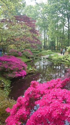 Japanese garden @Laura Nicholson, the hague