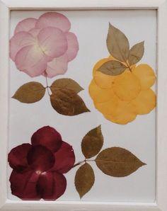 Pressed rose petals & leaves