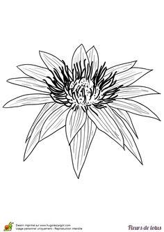 Une magnifique fleur de lotus à colorier