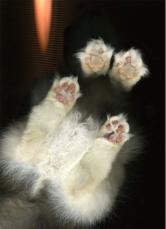 Gatos...escaneados!