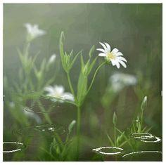 imágenes coloridas hermosas y Gif: Cuadros de la flor hermosa.