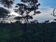 Bei unserem Sunset Drive haben wir noch kurz vor Sonnenuntergang eine Giraffenfamilie getroffen. Es war so schön anzusehen wie sie im Abendlicht verschwunden sind Smartphone Fotografie, Wanderlust, Giraffe, Celestial, Sunset, Instagram, Outdoor, Nice Asses, Pictures