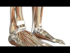 13.Fascia and Retinacula of the Foot 3D Anatomy Tutorial - YouTube