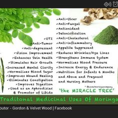 """Zija is not the """"latest fad."""" It is pure nutrition for your body! Don't wait even one more day to start enjoying the benefits of this miracle tree! Healthy Lifestyle Tips, Healthy Tips, Healthy Choices, Healthy Eating, Miracle Tree, Wound Healing, Isagenix, Health Quotes, Moringa Oleifera"""