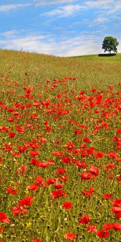 a field full of flowers