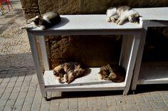 https://flic.kr/p/SDkbkG | Sleeping Cats, Medina, Essaouira