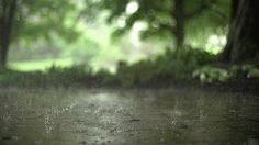 Gif of rain relaxing meditation Relaxing Rain Sounds, Rain Sounds For Sleeping, Relaxing Music, Love Rain, Water Drops, Rain Drops, Gif Chuva, Beste Gif, Rain Gif