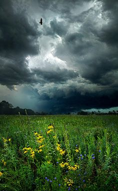 ☀Passing By, by Phil Koch