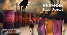 The food your dog eats, the air hebreathes, and the water he drinks all contain a common ingredient  ... toxins.  Every day, your dog is exposed toheavy metals (lead, mercury, cadmium, arsenic, aluminum and nickel), petrochemicals, and …