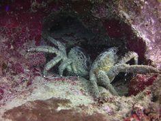 Diving, Animals, Animales, Scuba Diving, Animaux, Animal, Animais, Dieren