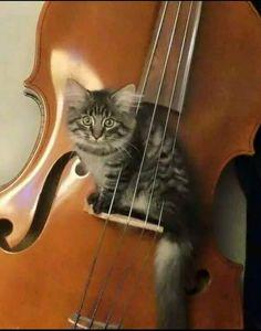 """Rebecca time to serenade me!"""