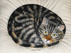 ANOUK , le chat de Frank by rockpainting , yvette 2 034 000 wiews♥, via Flickr