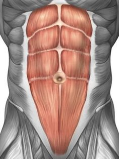 Photographic Print: Close-up View of Male Abdominal Muscles Poster by Stocktrek Images : 24x18in