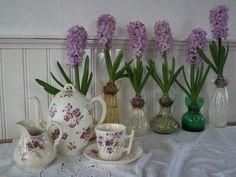 Deze hyacinten zijn in het donker voorgetrokken. www.bordercollieinderozentuin.blogspot.nl