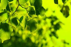 spring green=that one day in the spring when all the leaves push their fresh selves out and glisten.  Best day of the year.
