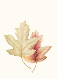 Corinne Lapin-Cohen | American Society of Botanical Artists