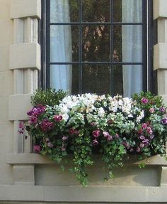love the composition of this window box. So pretty. love the composition of this window box. So pretty.love the composition of this window box. So pretty. Window Box Flowers, Flower Boxes, Container Plants, Container Gardening, Winter Window Boxes, Window Planter Boxes, Planter Ideas, Garden Windows, Plantation