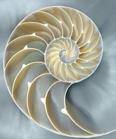 Nautilus In Blue I Print by Caroline Kelly - AllPosters.co.uk