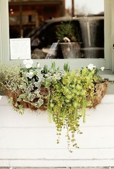 "window|box ...creeping jenny, sedum 'Angelina,"" ivy, silver thyme, impatiens"