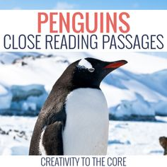 Grab the bundle of Antarctic animals and save 20%!January Close Read BundleClose reading works to help teachers gradually release responsibility to students while reading. The process of close reading enables students to feel comfortable and independent while tackling complex texts.