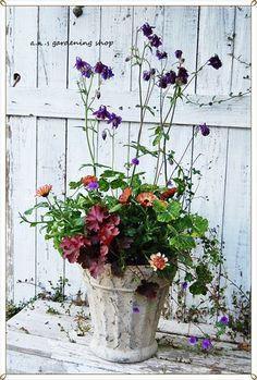 Potted Flowers, Flower Pots, Dream Garden, Container Gardening, Flora, Plants, Container Plants, Balcony, Lawn And Garden