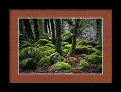 Shining Through Framed Print By Marnie Patchett